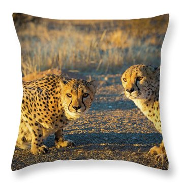 Two Cheetahs Throw Pillow by Inge Johnsson