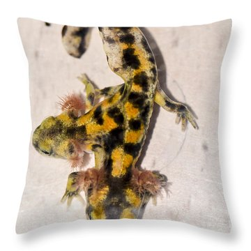 Two-headed Near Eastern Fire Salamande Throw Pillow by Shay Levy