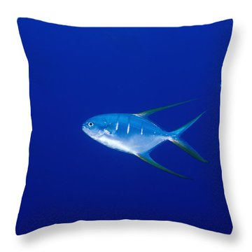 Two Pompano Fish And A Cleaner Fish Throw Pillow by James Forte