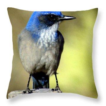 Utah Bird Throw Pillow by Marty Koch