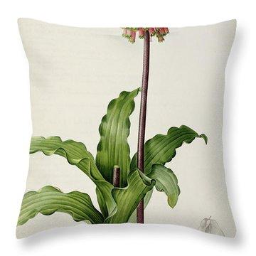 Veltheimia Capensis Throw Pillow by Pierre Joseph Redoute