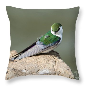 Violet-green Swallow Throw Pillow by Mike Dawson