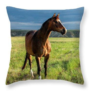 Western Stallion Throw Pillow by Todd Klassy