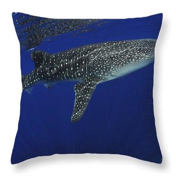 Whale Shark Near Surface With Sun Rays Throw Pillow by Mathieu Meur