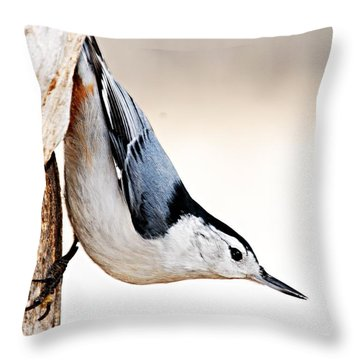 White-breasted Nuthatch Throw Pillow by Larry Ricker