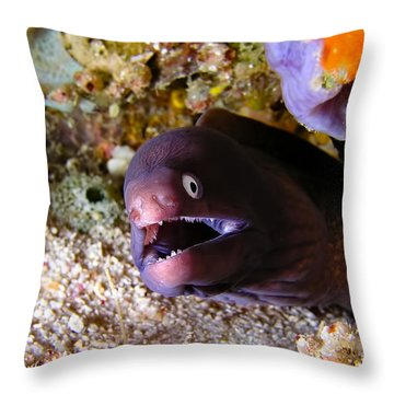 White-eyed Moray Throw Pillow by Joerg Lingnau