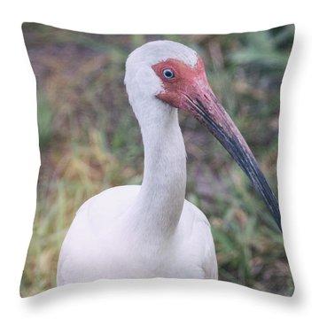 White Ibis In The Morning Light  Throw Pillow by Saija  Lehtonen