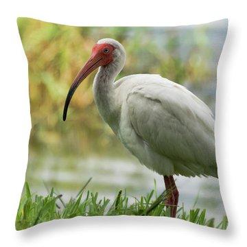 White Ibis On The Florida Shore  Throw Pillow by Saija Lehtonen