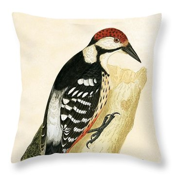 White Rumped Woodpecker Throw Pillow by English School