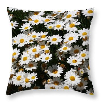 White Summer Daisies Throw Pillow by Christine Till