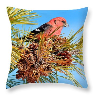 White-winged Crossbill Throw Pillow by Debbie Stahre
