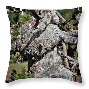 Whitebark Pine Tree - Iconic Endangered Keystone Species Throw Pillow by Christine Till