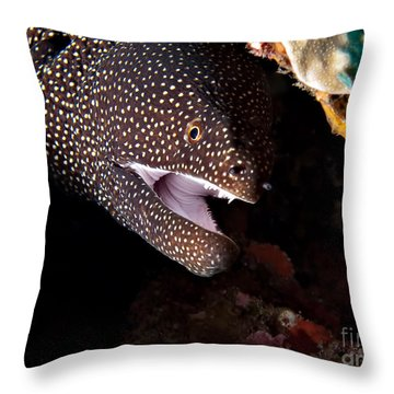 Whitemouth Moray Eel Throw Pillow by Joerg Lingnau