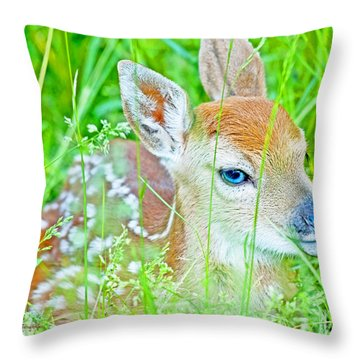 Throw Pillow featuring the photograph Whitetailed Deer Fawn by A Gurmankin