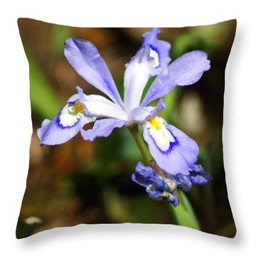 Wild Iris Throw Pillow by Marty Koch