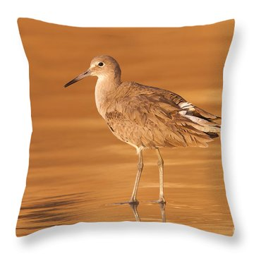 Willet Throw Pillow by Clarence Holmes