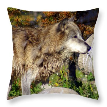Wolf On Patorl Throw Pillow by Marty Koch