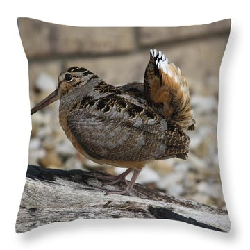 Woodcock Throw Pillow by Donna  Smith