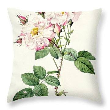 York And Lancaster Rose Throw Pillow by Pierre Joseph Redoute
