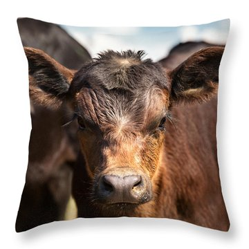 Young Angus Throw Pillow by Todd Klassy
