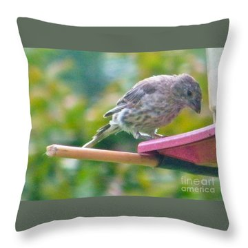 Young Crossbill Female  August  Indiana Throw Pillow by Rory Cubel
