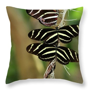 Zebra Butterflies Hanging On Throw Pillow by Sabrina L Ryan