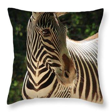 Zebra Portrait Throw Pillow by Aidan Moran