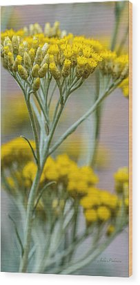 Curry Plant Aroma Wood Print by Julie Palencia