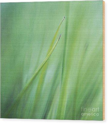 Feathery  Wood Print by Priska Wettstein