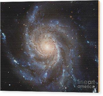 Messier 101 Wood Print by Barbara McMahon