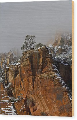The Lone Tree In Oak Creek Wood Print by Tom Kelly
