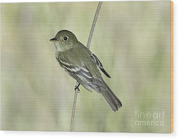Acadian Flycatcher Wood Print by Anthony Mercieca