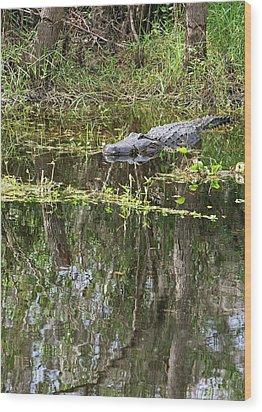 Alligator In Swamp Wood Print by Jim West