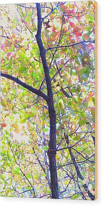 Autumn Leaves Wood Print by Scott Cameron