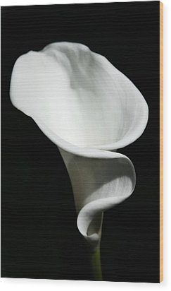 Calla Lilly Wood Print by Cathie Tyler