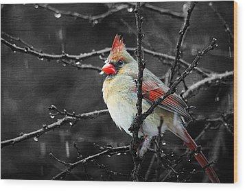 Cardinal On A Rainy Day Wood Print by Trina  Ansel