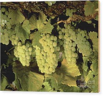 Chardonnay Wine Clusters Wood Print by Craig Lovell