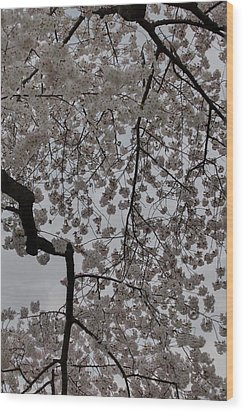 Cherry Blossoms - Washington Dc - 011342 Wood Print by DC Photographer