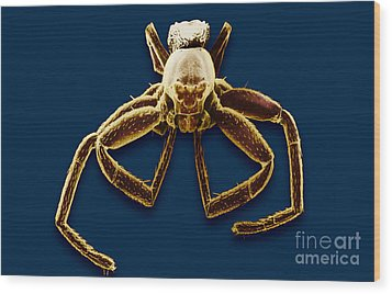 Crab Spider Wood Print by David M. Phillips