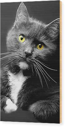 Domestic Gray And White Short Hair Wood Print by Diana Angstadt