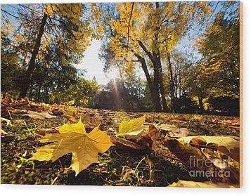 Fall Autumn Park. Falling Leaves Wood Print by Michal Bednarek