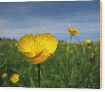 Field Of Buttercups Wood Print by Matt Taylor