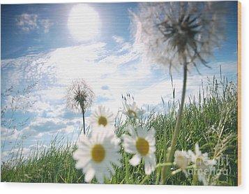 Fresh Meadow Background Wood Print by Michal Bednarek