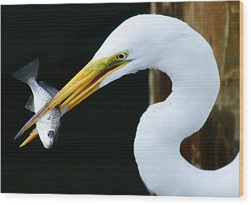 Great Catch Wood Print by Paulette Thomas