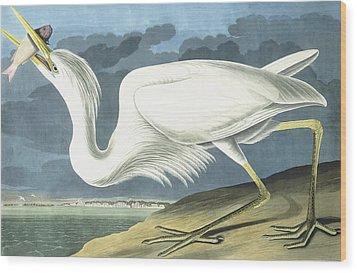 Great White Heron Wood Print by John James Audubon
