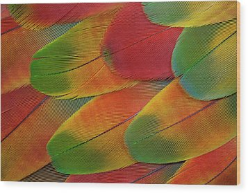 Harlequin Macaw Wing Feather Design Wood Print by Darrell Gulin