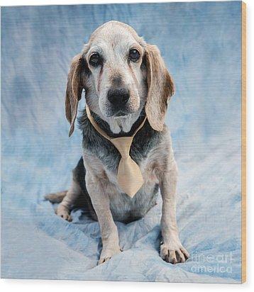 Kippy Beagle Senior And Best Dog Ever Wood Print by Iris Richardson