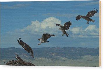 Landing Pattern Of The Osprey Wood Print by Ernie Echols