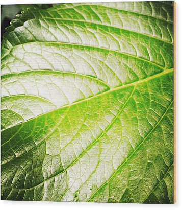 Leaf Wood Print by Les Cunliffe