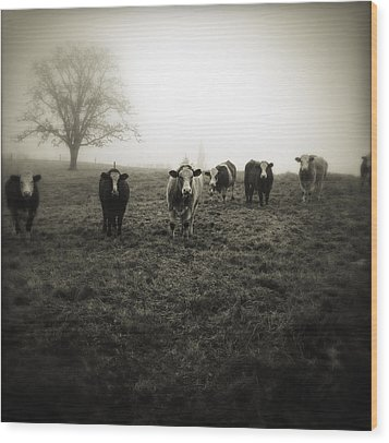 Livestock Wood Print by Les Cunliffe